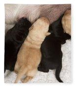 Yellow Labrador Suckling Puppies Fleece Blanket