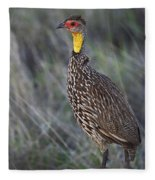 Yellow-necked Francolin... Fleece Blanket