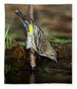 Yellow-rumped Warbler Drinking Fleece Blanket