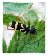 Yellow Stripped Beetle Fleece Blanket