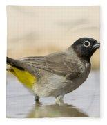 Yellow-vented Bulbul Pycnonotus Xanthopygos Fleece Blanket