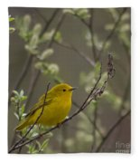Yellow Warbler -1 Fleece Blanket