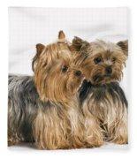 Yorkshire Terrier Dogs Fleece Blanket