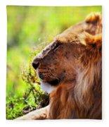 Young Adult Male Lion On Savanna. Safari In Serengeti Fleece Blanket