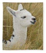 Young Alpaca Fleece Blanket