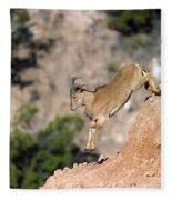 Young Auodad Sheep Descending The Canyon Fleece Blanket