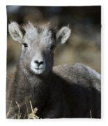Young Bighorn Sheep Fleece Blanket