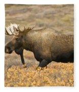 Young Bull Moose Fleece Blanket