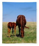 Young Colt And Mother Fleece Blanket