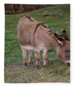 Young Donkey Eating Fleece Blanket