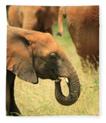 Young Elephant Fleece Blanket