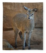 Young Female Klipspringer Fleece Blanket