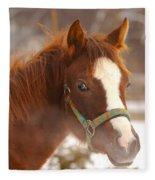 Young Horse In Winter Day Fleece Blanket