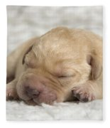 Young Labrador Puppy Fleece Blanket