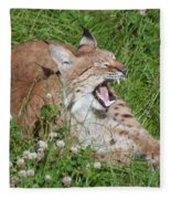 Young Lynx Yawning Fleece Blanket