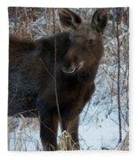 Young Moose 4 Fleece Blanket