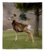 Young Mule Deer Fleece Blanket