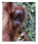 Young Orangutan Kiss Fleece Blanket