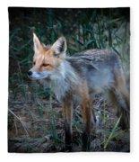 Young Red Fox Fleece Blanket
