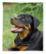 Young Rottweiler Fleece Blanket
