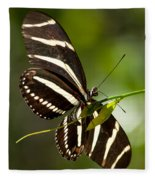 Zebra Longwing 3 Fleece Blanket