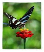 Zebra Swallowtail Butterfly On A Red Zinnia Fleece Blanket