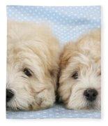 Zuchon Teddy Bear Dogs, Lying Fleece Blanket