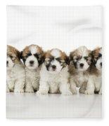 Zuchon Teddy Bear Puppy Dogs Fleece Blanket