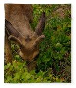 A Young Buck Grazing Fleece Blanket