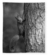 Red Squirrel In Bw Fleece Blanket