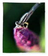 0002 Dragonfly On A Salvia Burgundy Candle Fleece Blanket
