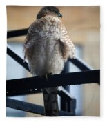 01 Falcon  Fleece Blanket