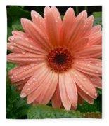 04-19-09 Gerbera Daisy Fleece Blanket