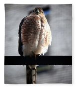 05 Falcon Fleece Blanket