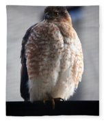 06 Falcon Fleece Blanket
