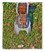 06 Grey Squirrel Sciurus Carolinensis Series Fleece Blanket