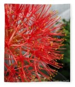 African Blood Lily Or Fireball Lily Fleece Blanket