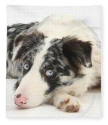 Blue Merle Border Collie Fleece Blanket