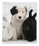 Border Collie Pups With Black Rabbit Fleece Blanket