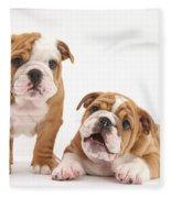 Bulldog Puppies Fleece Blanket