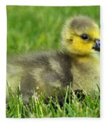 Canada Gosling Fleece Blanket