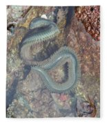 Clam Worm Fleece Blanket