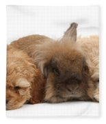 Cockerpoo Puppies And Rabbit Fleece Blanket