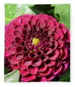 Dahlia Named Pride Of Place Fleece Blanket