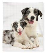 Dog And Puppy Fleece Blanket