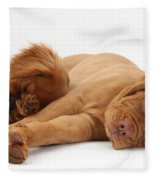 Dogue De Bordeaux And Cavalier King Fleece Blanket