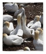 Gannet Birds Showing Fencing Behavior Fleece Blanket