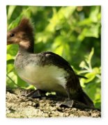 Immature Hooded Merganser Fleece Blanket
