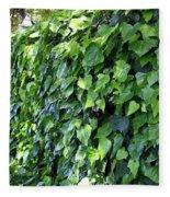 Ivy Wall Fleece Blanket