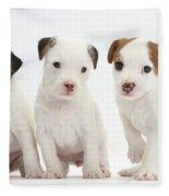 Jack Russell Puppies Fleece Blanket